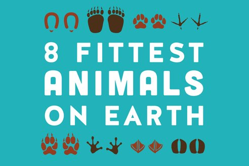 The Fastest, Strongest, Fittest Animals in the World