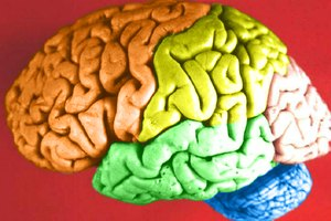What Are the Functions of Frontal Lobe of Brain?