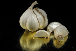 Roasted Garlic & Health