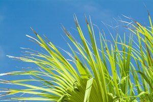 The Effects of Saw Palmetto on Women With too Much Andr…