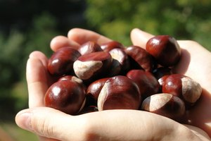 Vitamins in Chestnuts
