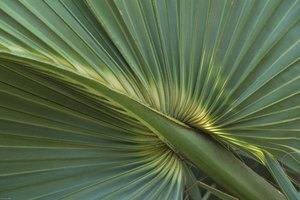 Can Zinc & Saw Palmetto Shrink the Prostate Gland?