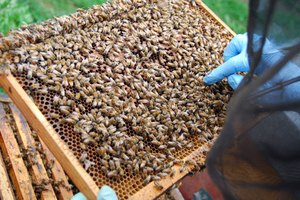 Bee Propolis & Royal Jelly Benefits