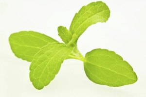 How Is Stevia Processed?