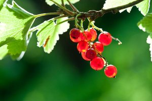 Red Currant Nutrition