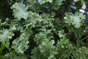 What Green, Leafy Vegetables Are High in L-Lysine?