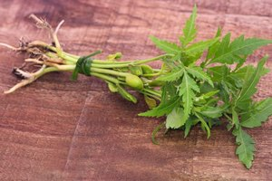 Does Neem Benefit Your Skin?