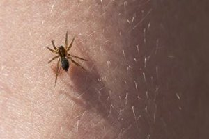 Are Brown Recluse Bites Fatal to Infants?