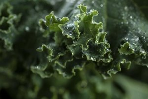 Is Kale Good for Weight Loss?
