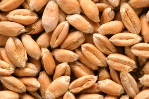 How to Cook Soft Wheat Berries