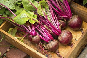 Can I Eat Beets Without Cooking Them?