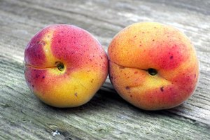 The Uses for Apricot Kernel Oil
