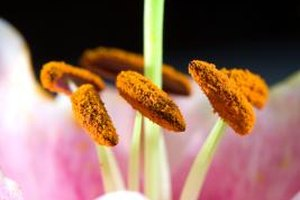 How to Use Bee Pollen Granules