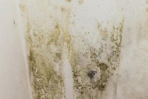 Health Risks of Mildew