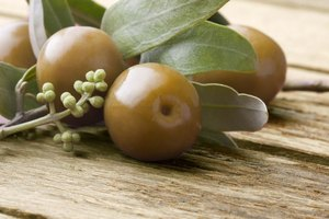 Interactions With Olive Leaf Extract & Blood Thinners