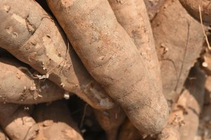 How to Cook a Wild African Yam