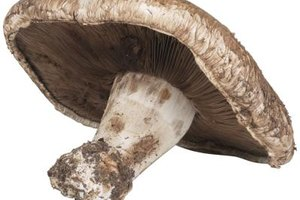 The Adverse Effects of Shiitake Mushrooms