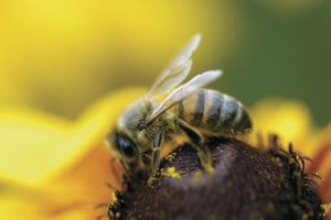 Bee Pollen & Fertility