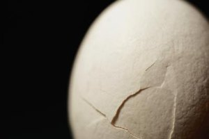 Eggshell as a Source of Calcium
