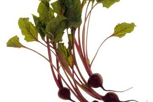 Is Beet Juice Good for Hormonal Balance?