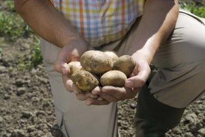 What Are the Benefits of Eating Raw Potatoes?