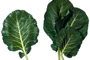 Benefits of Juicing Collard Greens