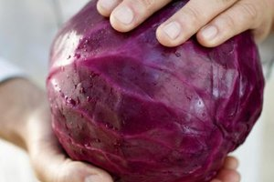 Red Cabbage Nutrition Information