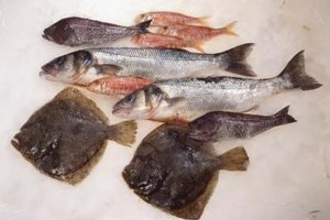 How to Cook Fish Whiting Fillets