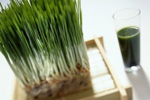 Wheatgrass Vs. Chlorella Vs. Spirulina Vs. Barley Grass