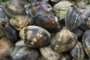 Littleneck Clams Nutrition