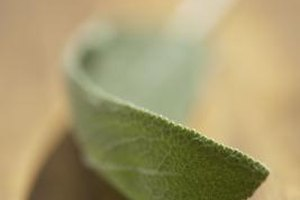 What Is the Difference Between White Sage and Regular S…