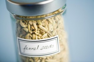 What Is Fennel Powder?