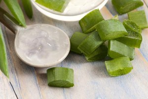 The Benefits of Aloe Vera Juice for Weight Loss