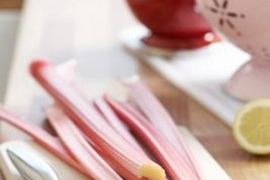 Rhubarb And Pregnancy