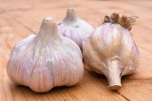 Garlic for High Triglycerides