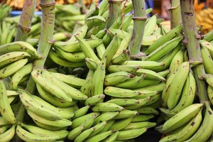 What Are the Health Benefits of Plantains?