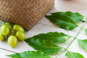 Neem Oil & Gum Disease