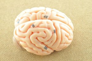 The Benefits of Acetylcholine