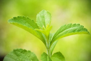 Is There a Diet Drink Made With Stevia?