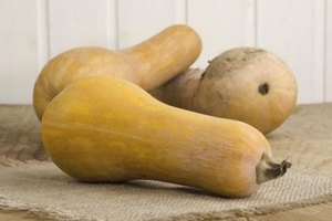 What Is the Glycemic Index of Butternut Squash?