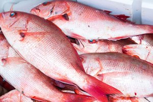 How to Bake Simple Red Snapper