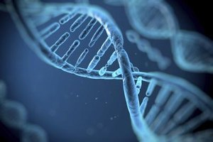 Supplements for DNA Repair