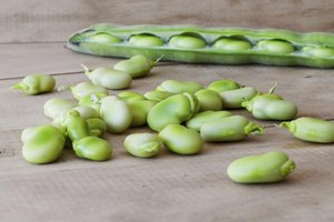 Butter Beans Nutrition Facts