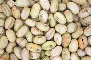 What Are the Benefits of Dry Roasted Soybeans?