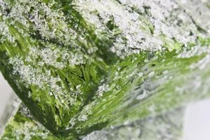 Facts About Frozen Spinach