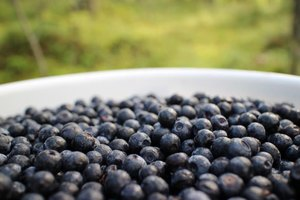 Will Blueberries Raise My Blood Sugar?