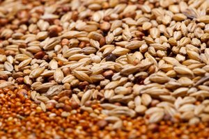Facts About Wheat Germ Nutrition