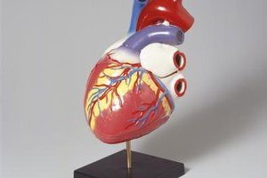 What Causes a Slightly Enlarged Heart?