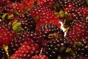 Benefits From Blackberry Juice