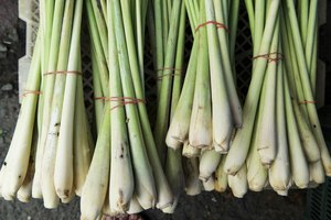 What Is Lemongrass Good For?